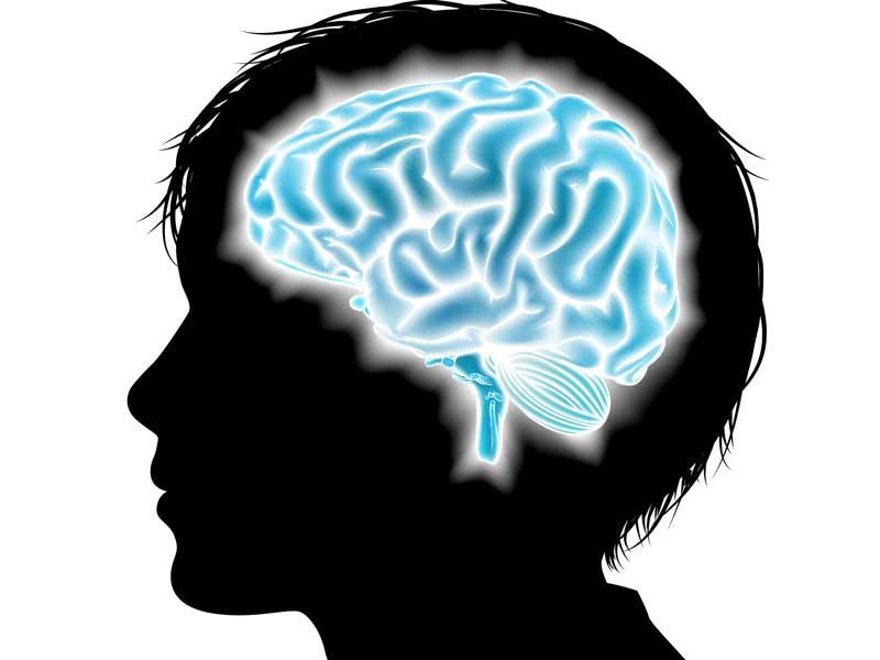 子供の脳のイラスト