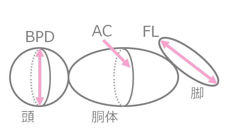 超音波検査の数値説明のイラスト