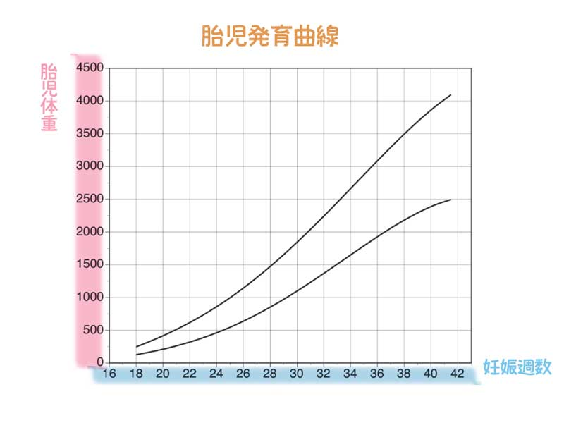 胎児発育曲線図