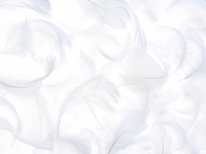 羽毛布団に使用される羽毛