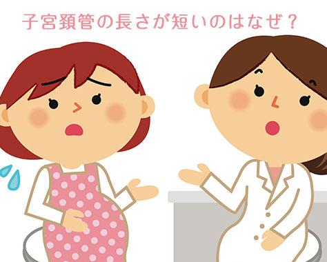 子宮頚管の長さと切迫早産の関係~子宮頚管が短い理由とは