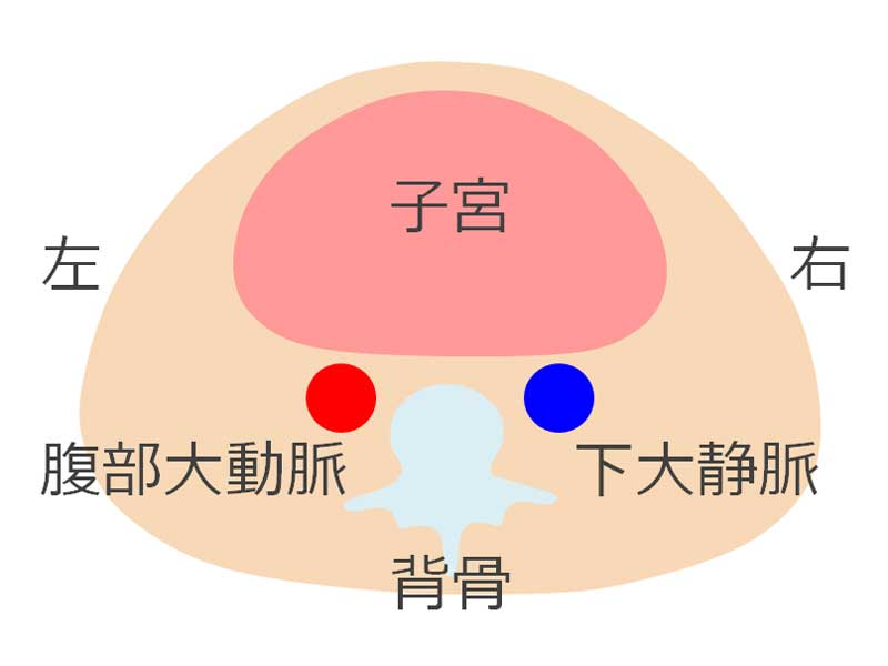 子宮と背骨が見える下腹部の断面図のイラスト