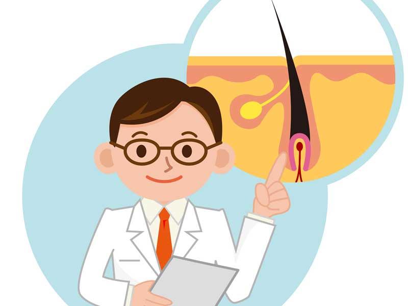 毛根の説明をしている医師のイラスト