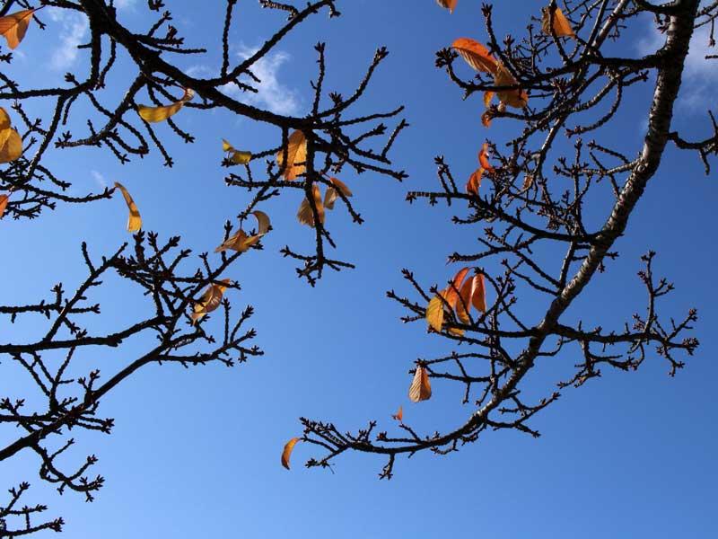 冬に枯れた木の枝