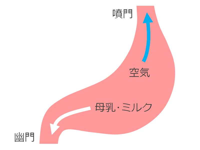 ゲップ説明の胃のイラスト