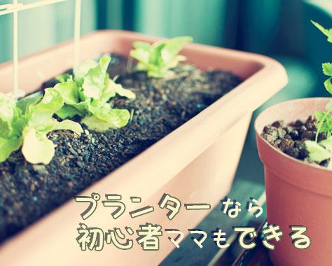 ベランダ菜園をやろう!家庭菜園初心者でも収穫できるコツ