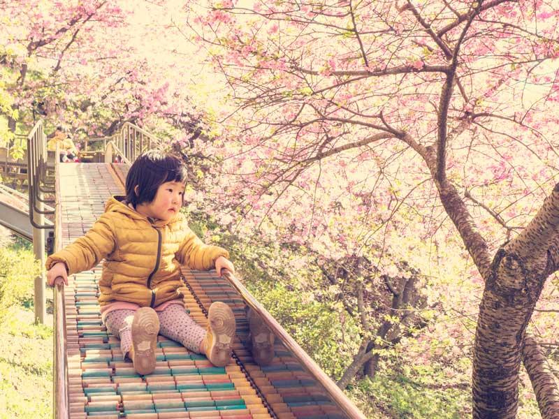 お花見期間に公園の滑り台で遊ぶ子供