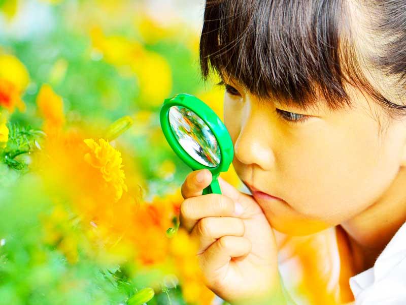 虫眼鏡で花を観察する女の子