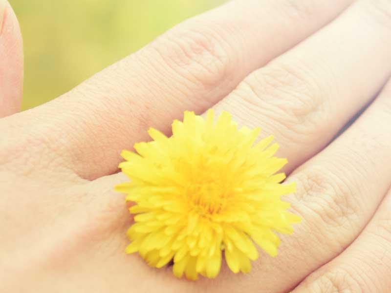 タンポポの花で作った指輪
