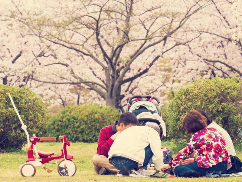 お花見をしている家族