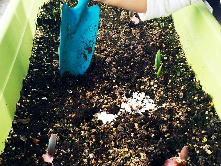 土に混ぜる細かく砕いた卵の殻