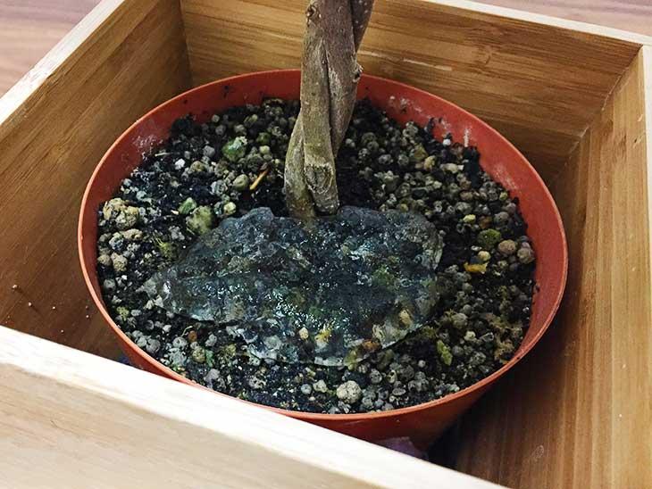 観葉植物の植木鉢に入れられた保冷剤の中身