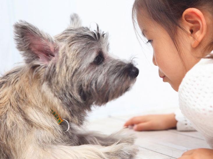 小犬と見つめ合う女の子