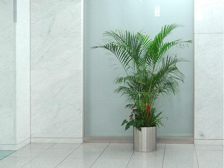 エレベーターホールの観葉植物