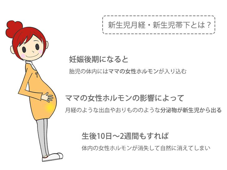 新生児月経・新生児帯下の解説イラスト