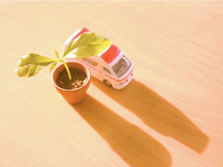 植木鉢の新芽と救急車