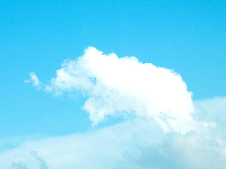 空に浮かぶ像の形をした雲