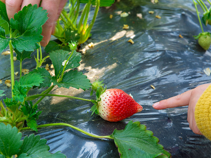 イチゴを指さす子供の手