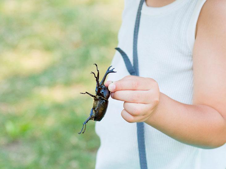 カブトムシを捕まえた男の子