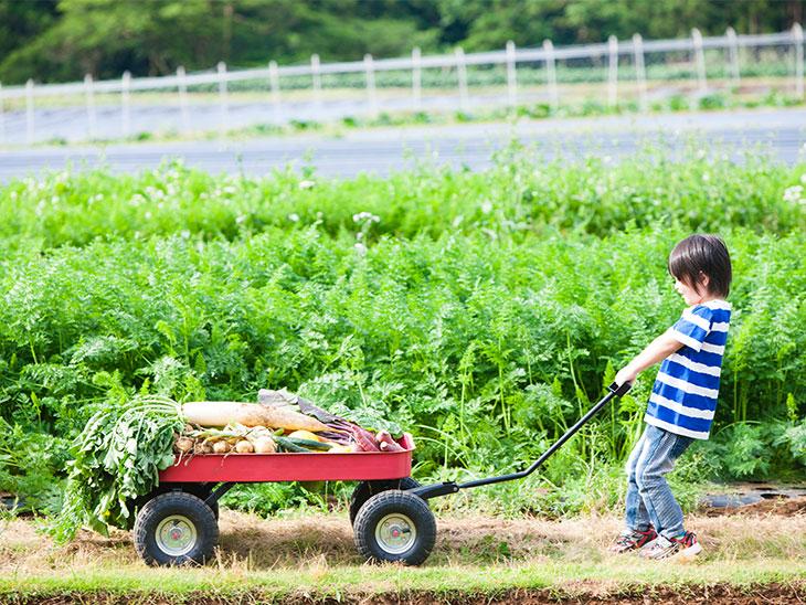 野菜の載った荷台を引く子供