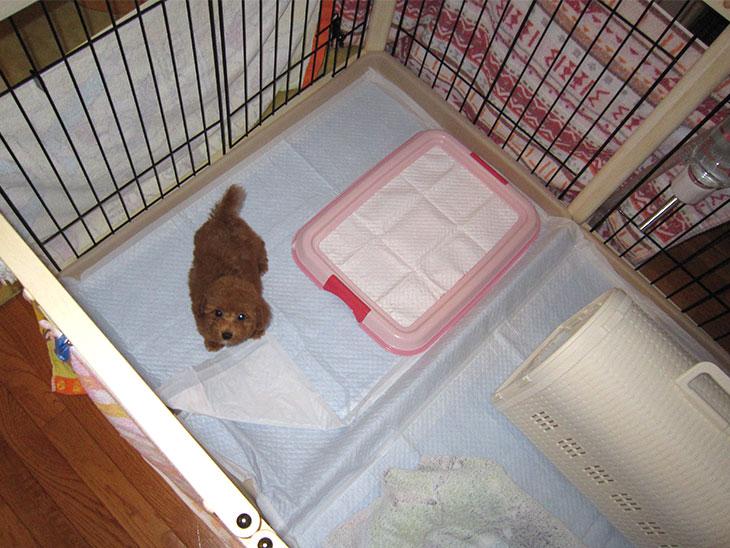 ケージの中にいる子犬