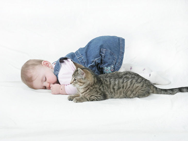 猫の横で眠る赤ちゃん