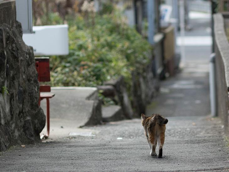 外を歩いてる猫の後ろ姿