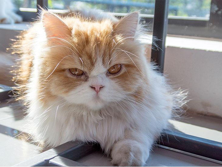 不機嫌そうな顔をした猫