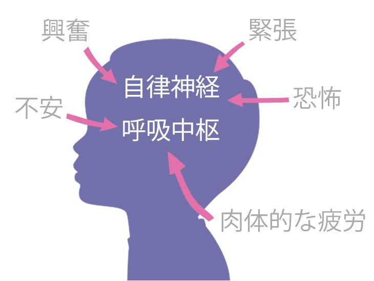 自律神経と呼吸中枢が受ける影響のイラスト