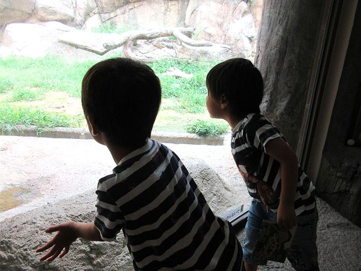 動物園で動物を見る兄弟