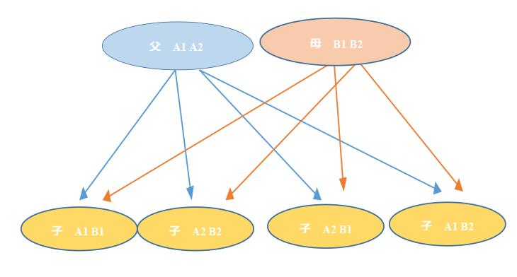 メンデルの法則の図