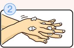 正しい手洗いの方法その2