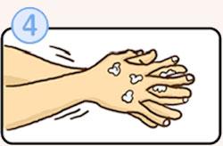 正しい手洗いの方法その4