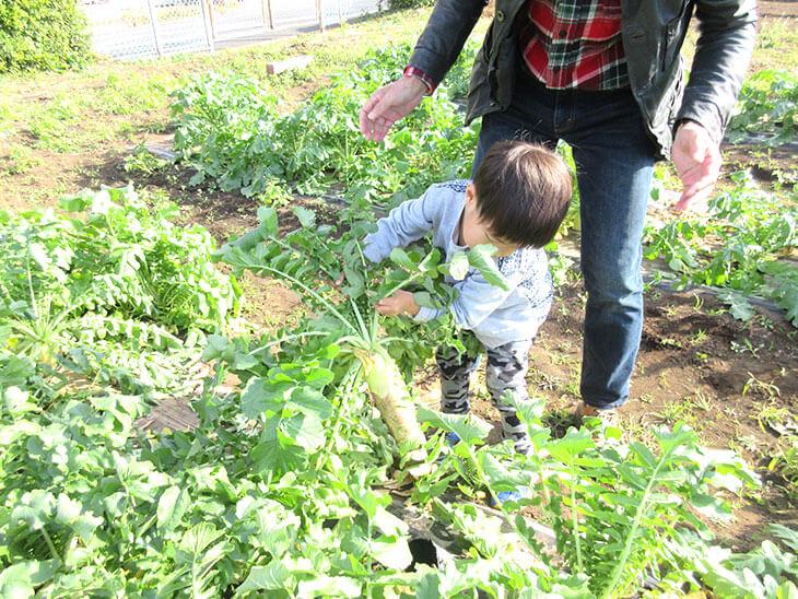 地域交流で大根収穫に参加する子供