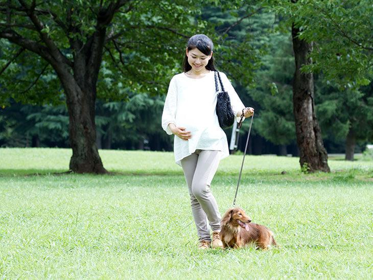 犬の散歩をする妊婦さん