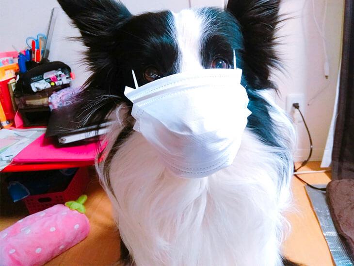マスクをした犬の画像