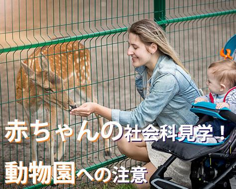 赤ちゃんの動物園デビューへの注意~ふれあいはいつから?