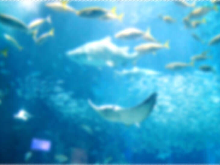 ピンボケ状態の水槽の中の魚