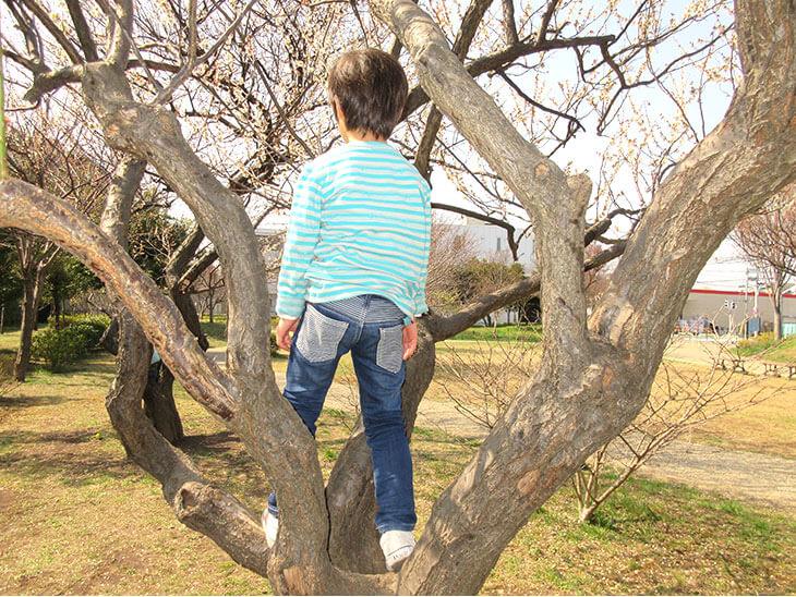 木登りをして遊ぶ幼児