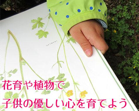 子供に植物で情操教育!花育や幼児の興味を育む10の方法