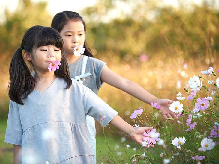 女の子2人とコスモスの花