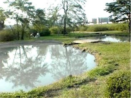 多摩川中央公園の写真