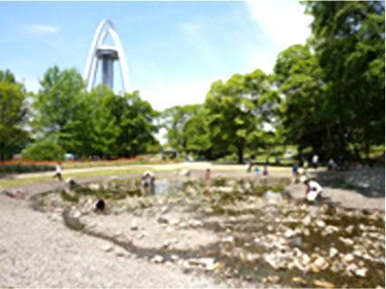 国営木曽三川公園138タワーパークのやすらぎの池