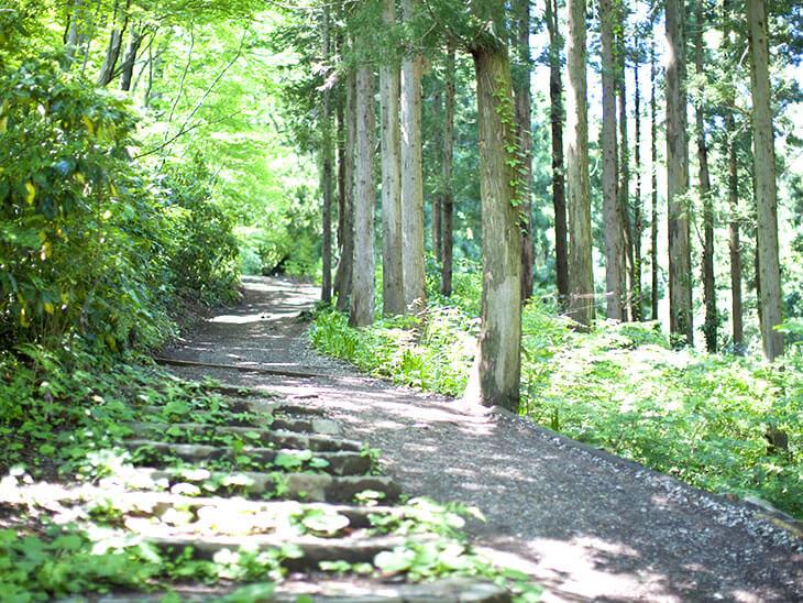 高尾さんの山道