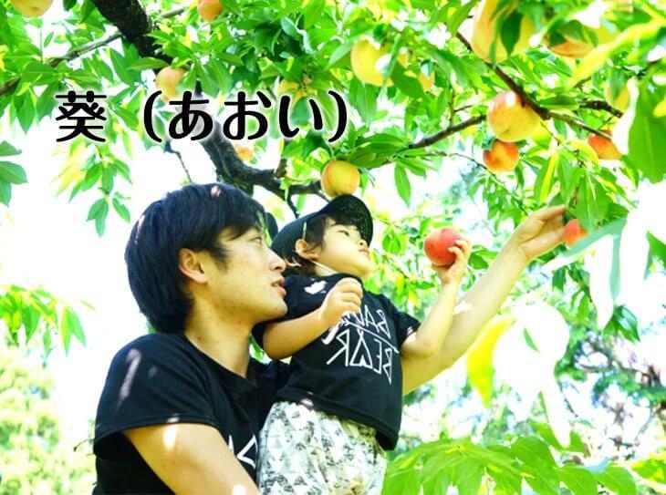 桃狩りをする親子