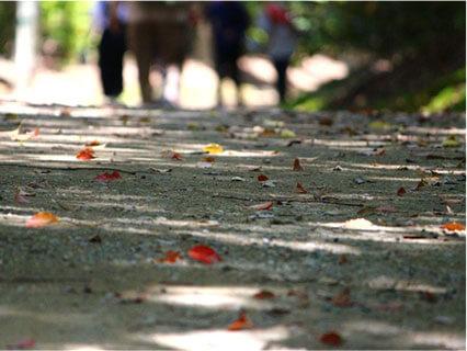公園で歩く人の後ろ姿