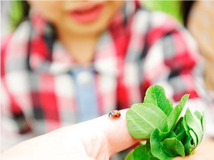 子供とてんとう虫を手に乗せる親の手