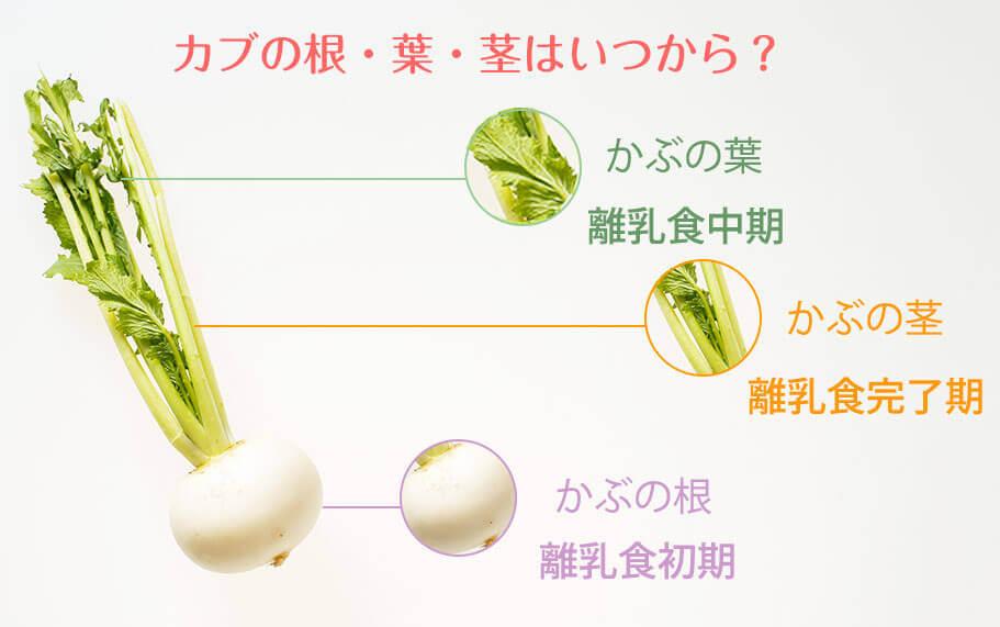 「離乳食にかぶの根・葉・茎はいつから?」図解