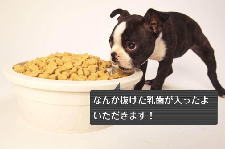 餌を食べる若い犬