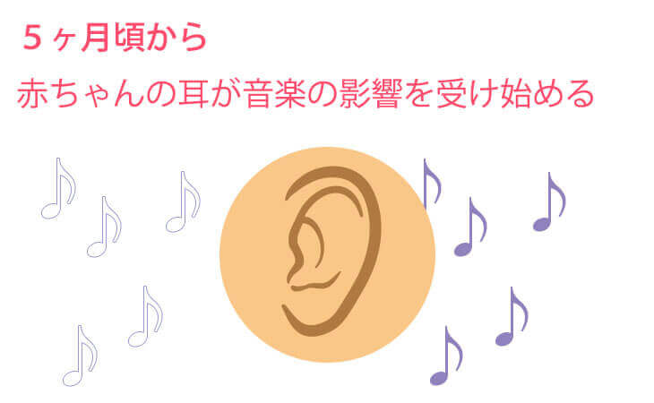 5ヶ月頃から赤ちゃんへの耳の変化のイラスト